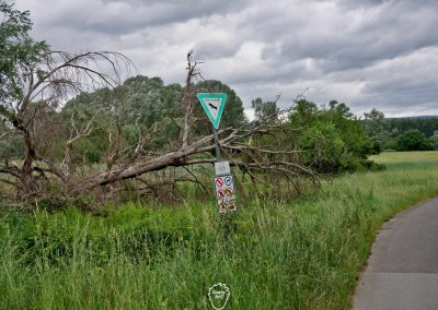 Das Naturschutzgebiet vor Mainz