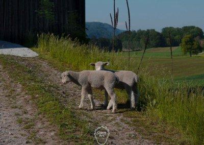 ... Durch die  wunderschöne Landschaft der Schweiz...
