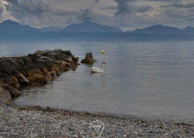 ...Mit einem eisig kalten Genfer See...