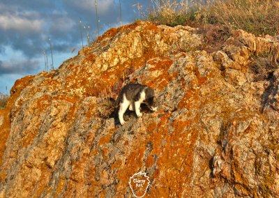 ... Oder einfach nur kletter-freudigen Katzen.